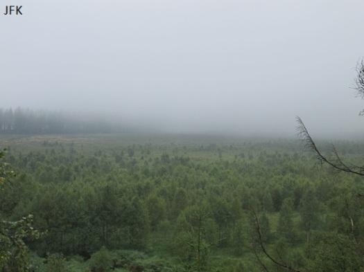 Het mistige landschap van de Hautes Fagnes