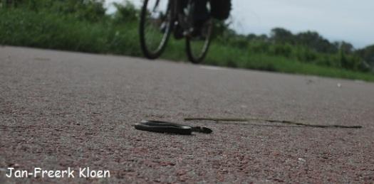 We wisten nog niet dat hij dood was, terwijl hij op het fietspad lag