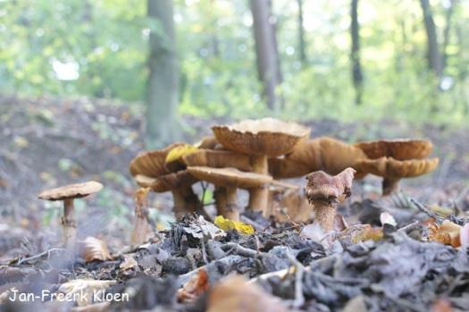 Een groepje oudjes op de achtergrond van een enkel oudje