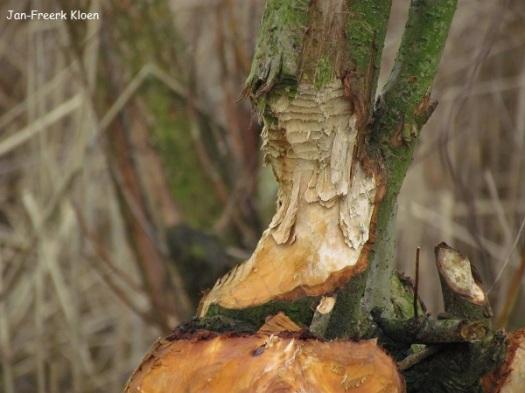 Hoelang zal deze boom nog leven?