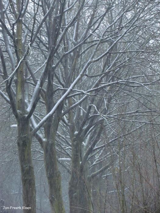 De bomen sneeuwen onder