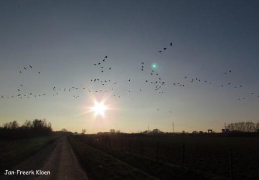 Ganzen voor de zon langs