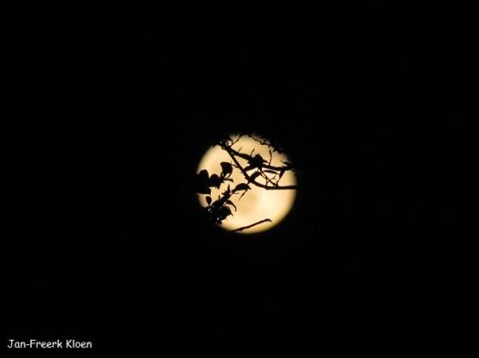Het was volle maan gisteravond