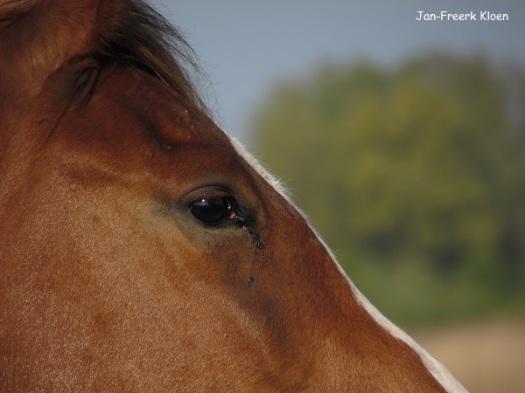 Vrijdag: Close-up paard