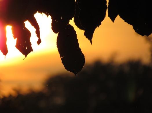 Blaadjes voor de zonsondergang