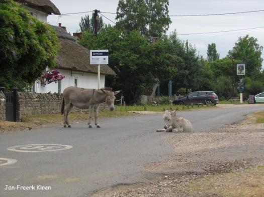 De ezels, koeien en paarden lopen overal door het gebied, en ook in de dorpjes binnen het gebied. Soms moest je flink lang wachten of door de berm.