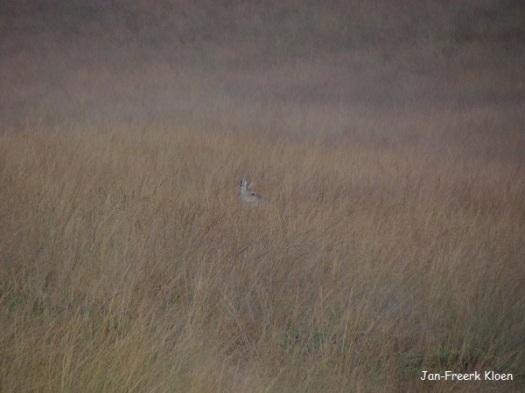 """Zoek de hinde in de """"savanne"""""""