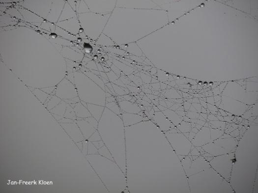 Deze spin heeft mist gevangen
