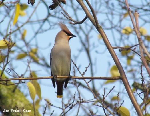 Pestvogelfoto 3