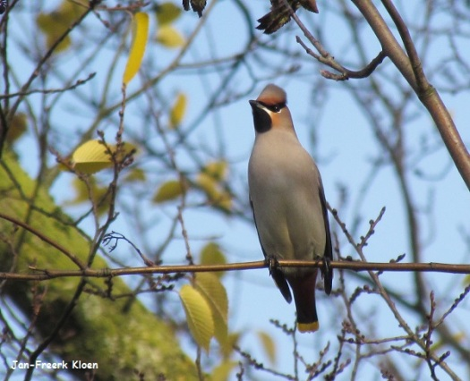 Pestvogelfoto 4