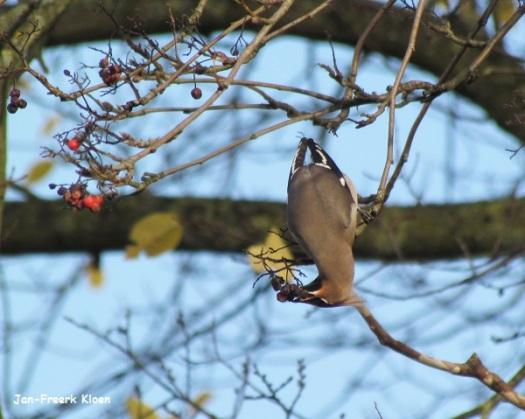 Pestvogelfoto 6: zie dat besje maar eens te pakken te krijgen!