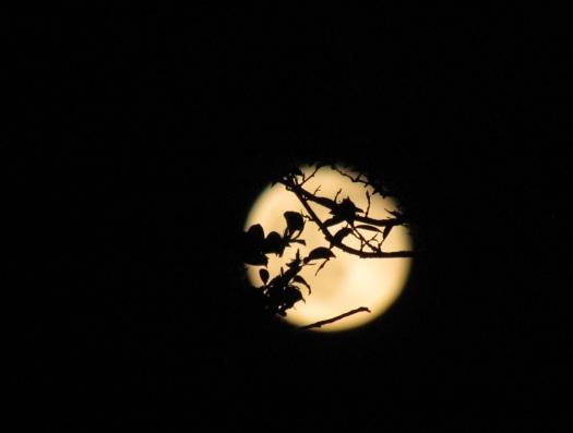 Foto 9: zie, de maan schijnt door de bomen!