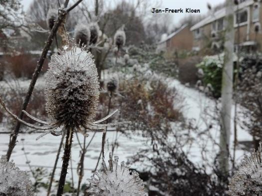 De kaardebollen, met ijs en sneeuw