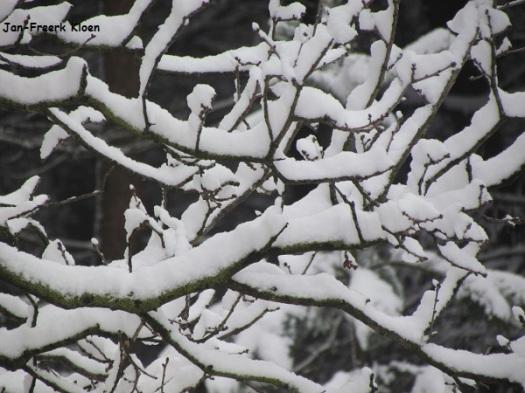 Mooie sneeuwtakken