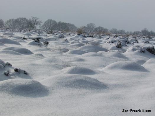 De heidepollen letterlijk onder de sneeuw